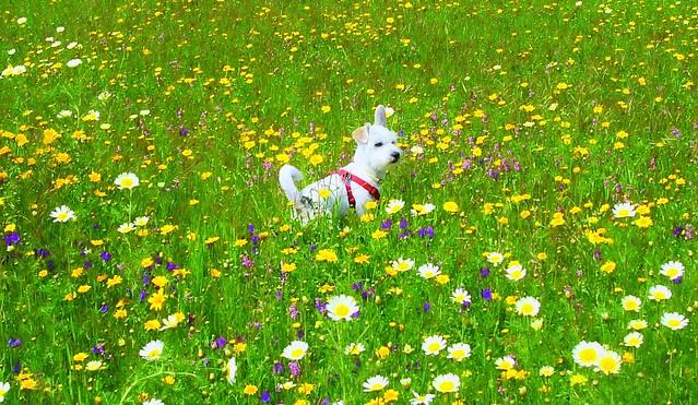 Tarko y las flores