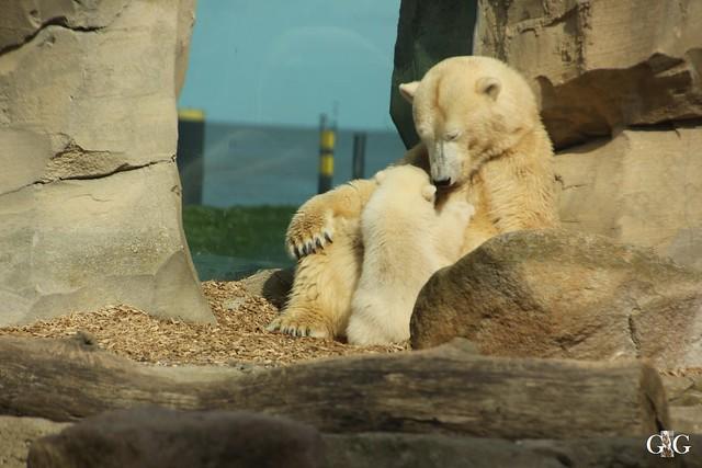 Zoo am Meer 01.05.201647