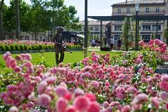 mer, 15/06/2016 - 17:28 - square Gambetta - 1 an après les aménagements