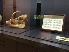 東京大学総合研究博物館「知の回廊」