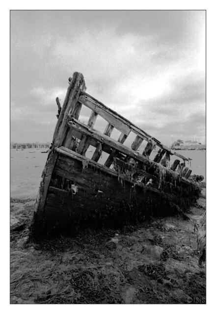 Dans un linceul d'algues (Larmor-Plage, Morbihan)