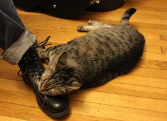 Luciano Loves Shoes