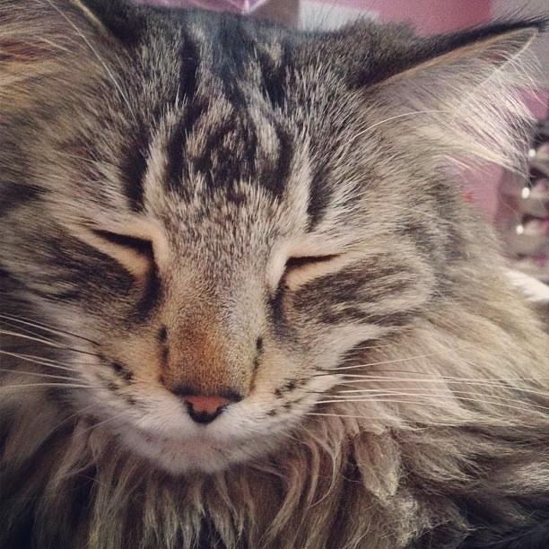 Day126 Happy Kitty 5.6.13 #jessie365