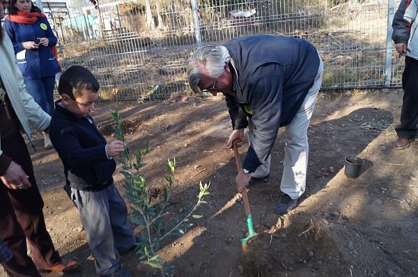 Actividad de Centro de Estudios Avanzados en Fruticultura, CEAF. Plantación de Olivos en Colegios. Rengo.