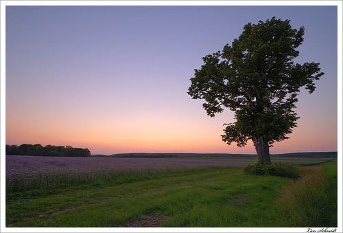sunset sky tree nature landscape sonnenuntergang natur himmel landschaft baum eichsfeld tamron1024mmf3545spdiiildaslif