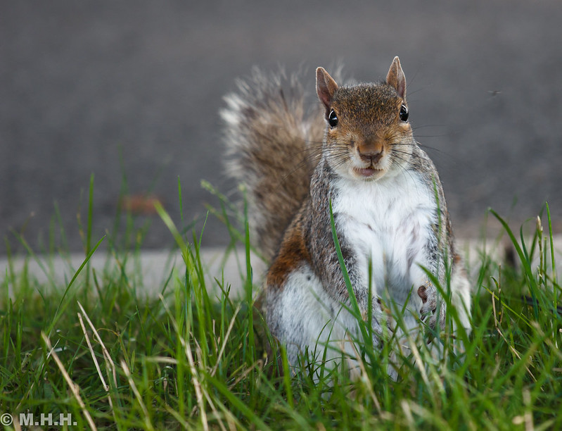 Squirrel by m_hamad