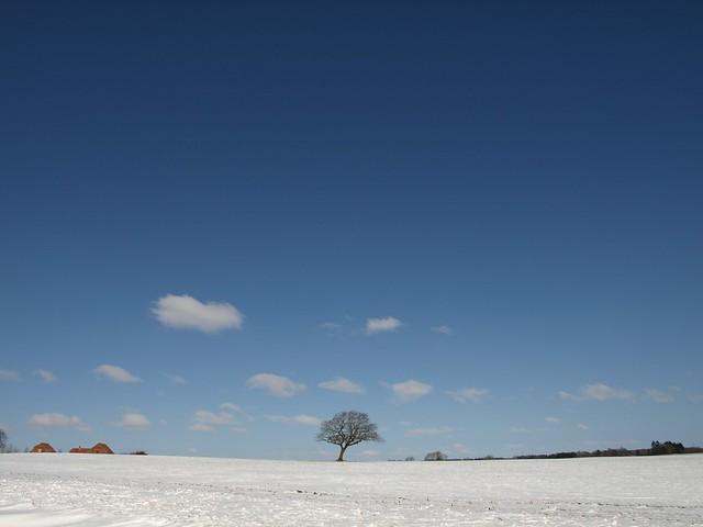 The white winter