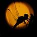 Stranger in the Night (2) by Bino99