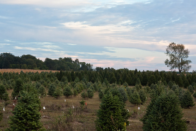 Piney Acres Christmas Tree Farm