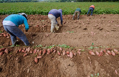 sowing(0.0), agriculture(1.0), farm(1.0), field(1.0), soil(1.0), farmworker(1.0), crop(1.0), plantation(1.0),