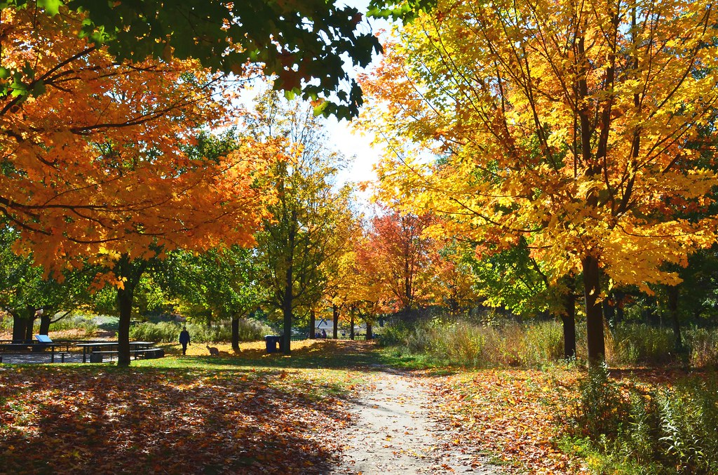 High Park (Colors of the Autumn)