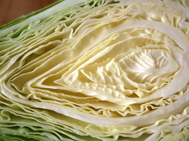 Inspiration cabbage