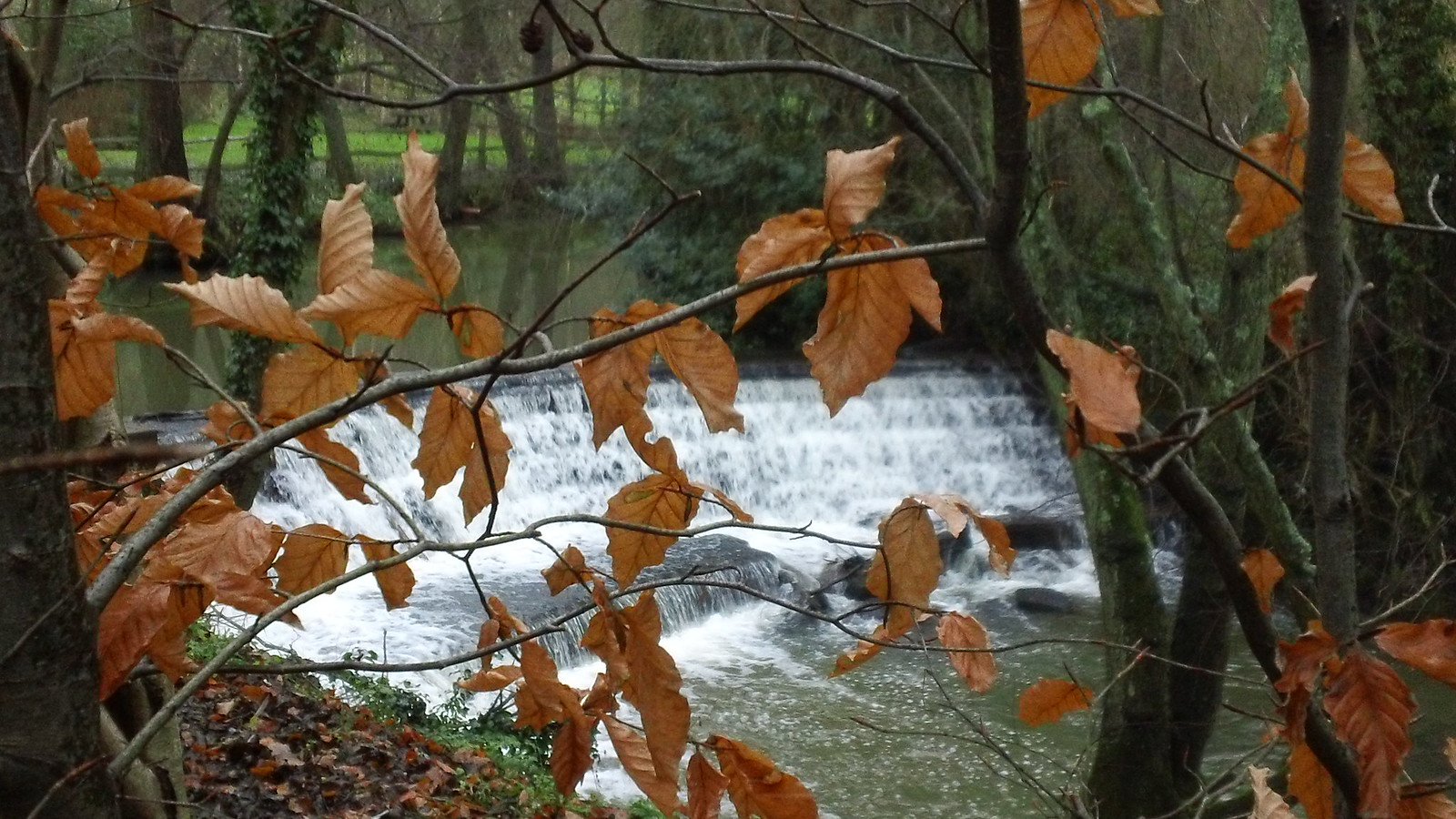 Weir with brown leaves