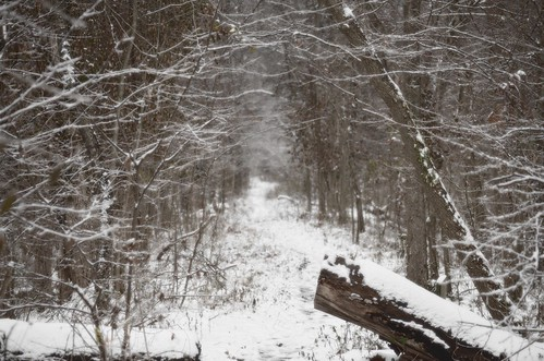 SnowyPath1 by paynehollow