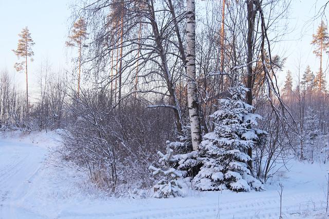 talvituli4