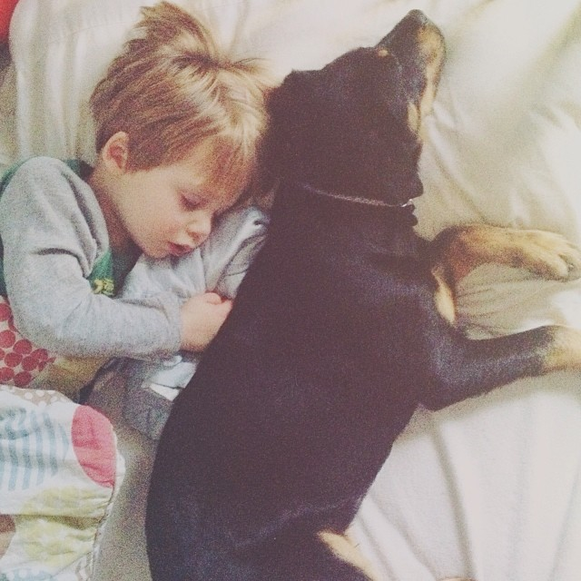 Having a very #theoandbeau kind of afternoon... #365grateful #teddygram #instateddy #rottie #puppy #bestfriends #nap #sleep #cuddle