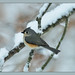 Tufted Titmouse by Diane G. Zooms