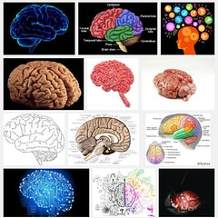 organism, head, medical, illustration, brain, organ,