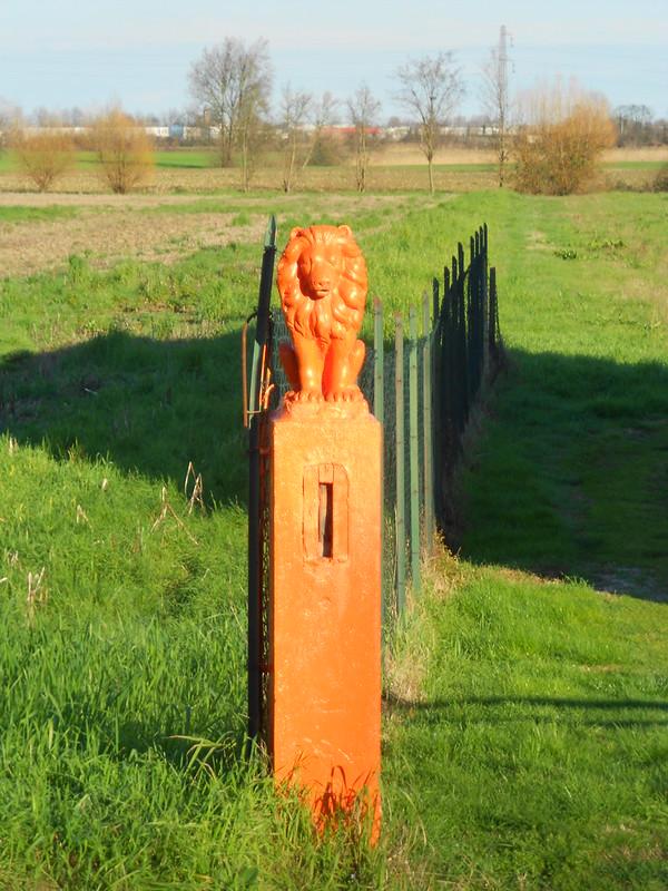 leone arancione polesano