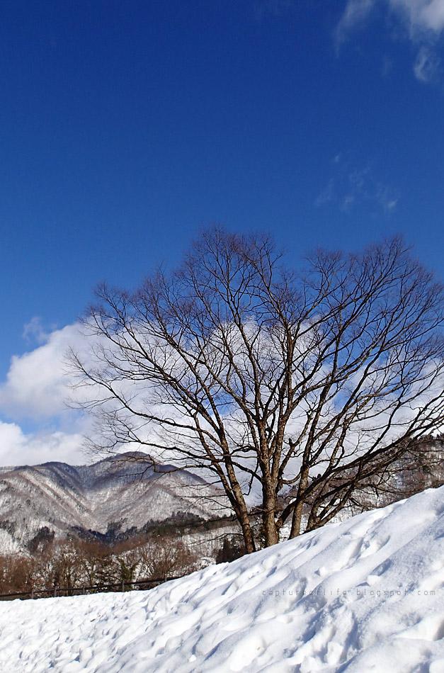 雪與白川郷