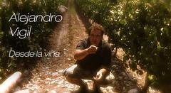 Ale Vigil Parte I: El vino argentino hoy apuesta a su verdadera identidad