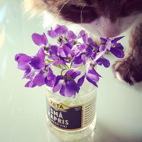 Följ @dagsattplocka för mysiga tips på naturgodis som luktviol, rödplister och kärleksört!