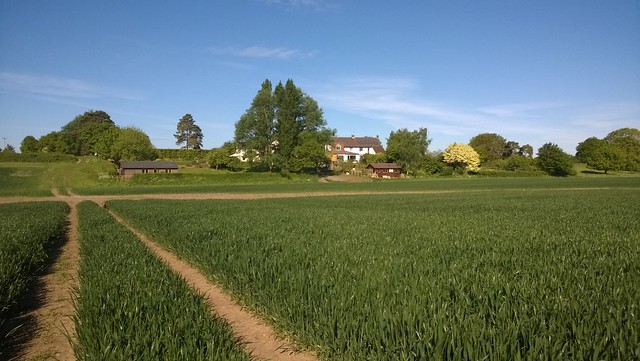 The field and the houses