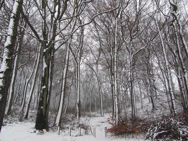 Schnee, seitlich