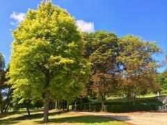 The trees of La Taupanne - Photo of Leigné-sur-Usseau
