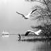 Birds in Fog on San Jacinto backwater