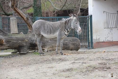 Sonntags Besuch im Zoo Berlin 25.01.2015 27