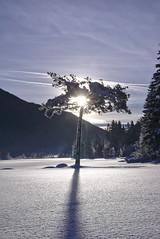 Winter's sunshine