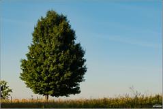 Sun kissed tree