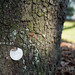 Tree survey tag