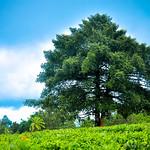 Enchanting Kerala - Idukki
