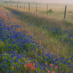 Texas Wildflowers, April 2013, On the Road