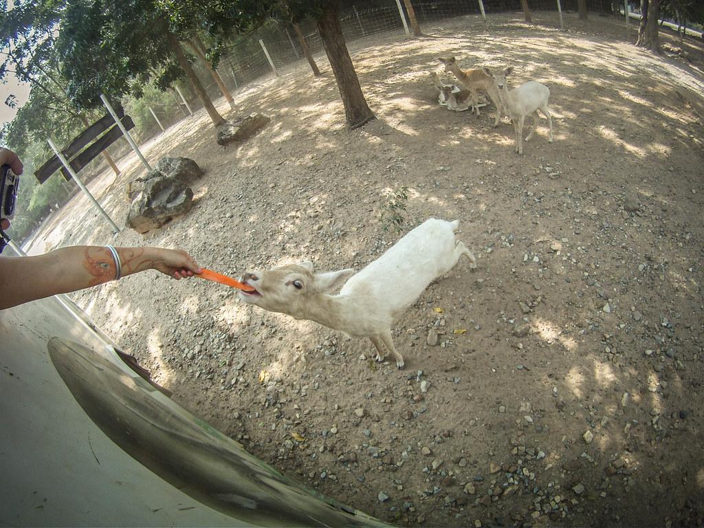 Imieniny 12.12 Safari w Kanchanaburi