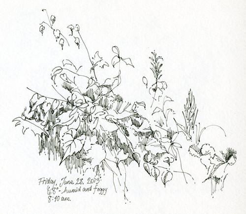 Weeds (6-28-13)