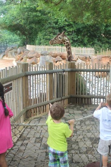 Atlanta Zoo '13, 3