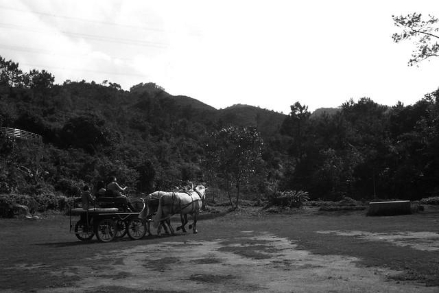 Leica 35mm f2.8 小八妹的黑白世界