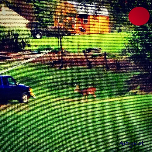 NINE POINT Buck standing at the corner of our property, munching fallen apples! by Arty_Kat