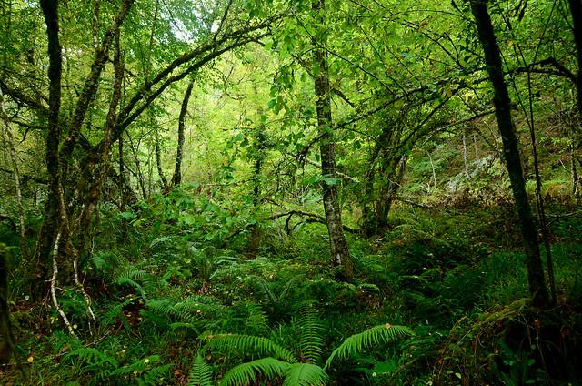 Selva asturiana