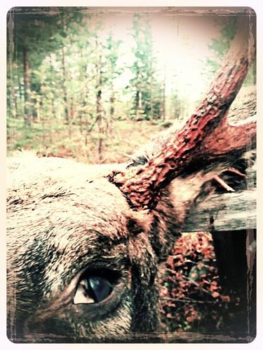 flickrandroidapp:filter=aardvark