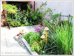 Attractive plants and flowers that brighten our frontyard - Sept 13 2013
