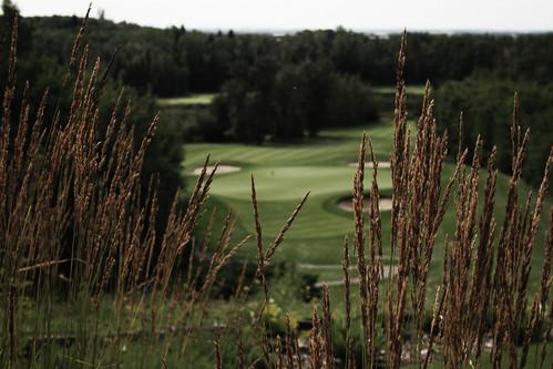 field golf course innisfail golfclub