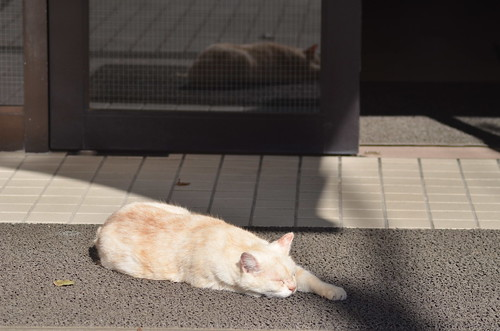 cats_2013-11-14_1