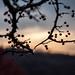 Fall Berries by M0rris82