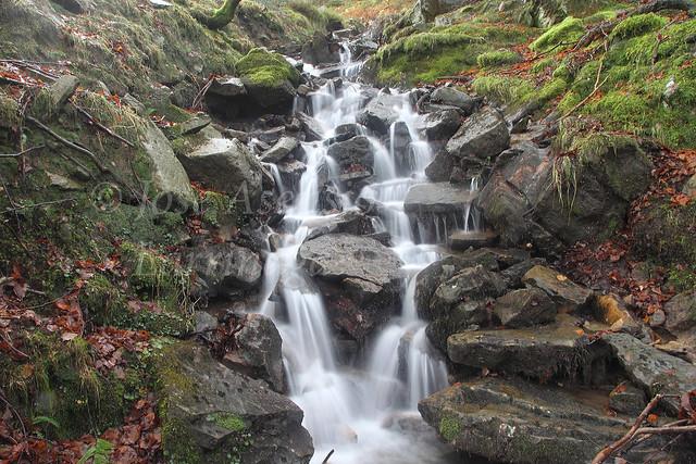 Parque Natural de Gorbeia/Gorbea #DePaseoConLarri #Photography 2136
