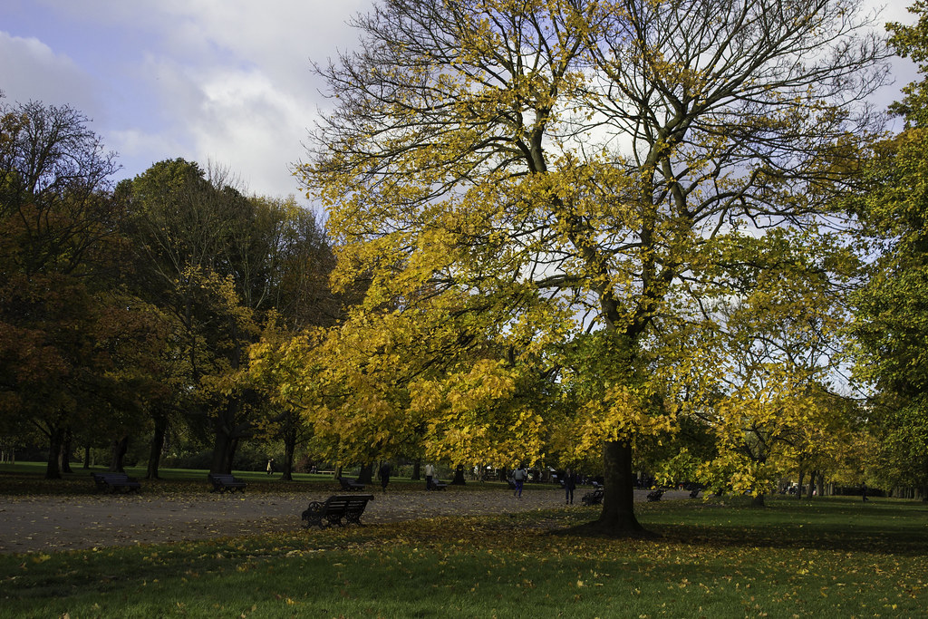 Kensington Park - colours of autumn