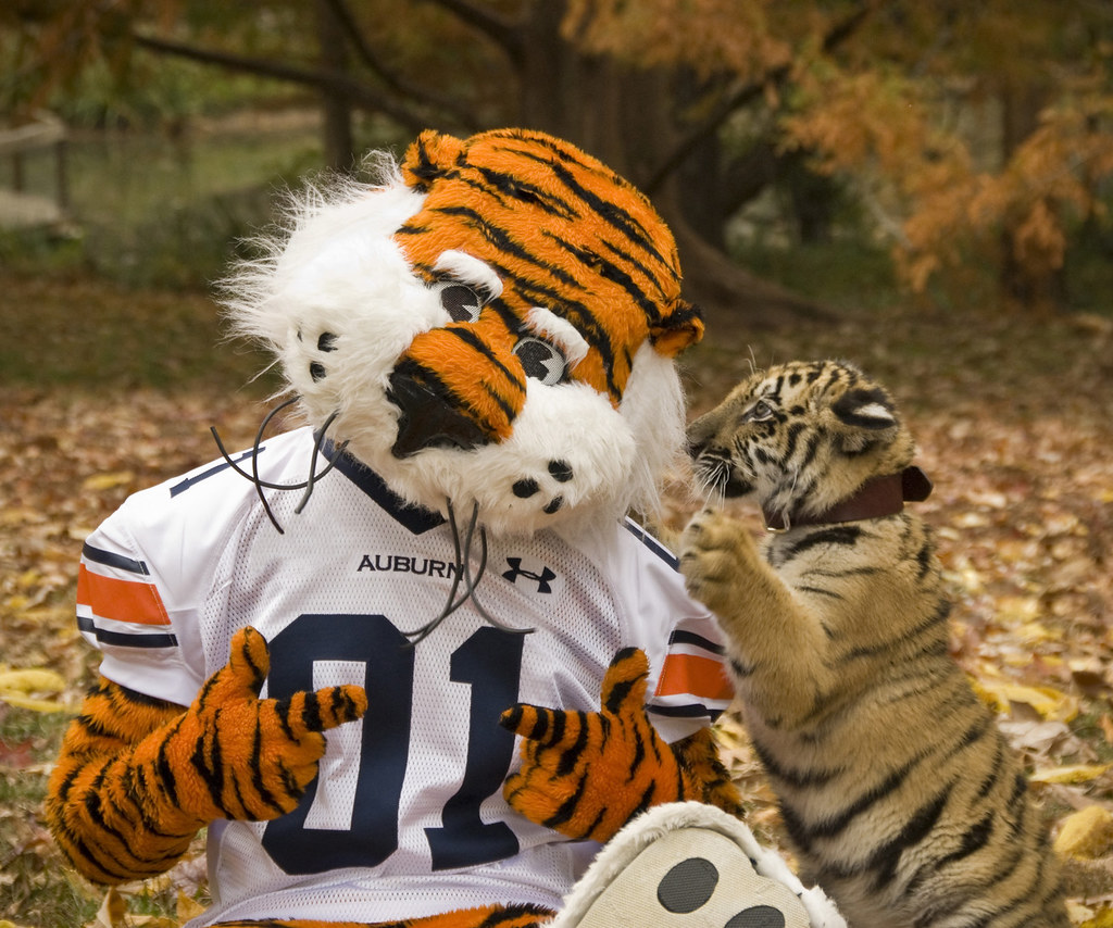 Aubie Auburn University Tigers For